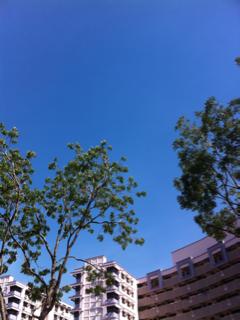 image-20121120154019.png